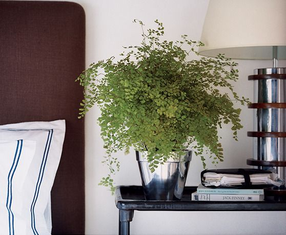 7. Soft and lacey: a delightful houseplant. (via domino)