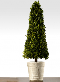 31 1/2in Boxwood Cone Topiary