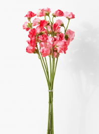17in Pink Sweet Pea Bunch