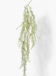 55in Air Plant Vine Hanging