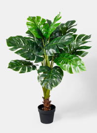 43in Monstera Plant
