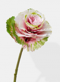 pink green ornamental cabbage floral pick