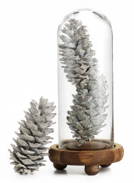5IN WHITE-WASHED PINECONES, SET OF 12